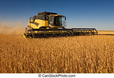 Yellow combine harvester - A yellow modern combine harvester...