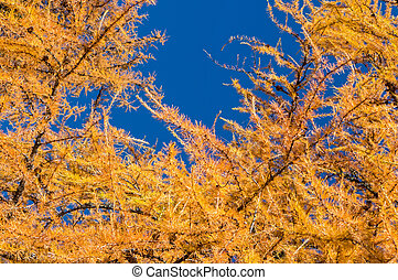 Detail of colorful coniferous tree