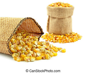corn - yellow corn grain in a burlap bag on a white ...