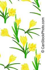 Yellow Crocus Flowers - Spring flowers, yellow blooming...