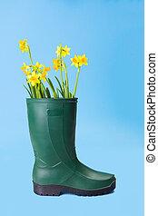 Yellow daffodils in gum boot