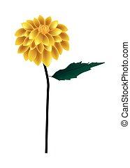 Yellow Dahlia Flower on A White Background