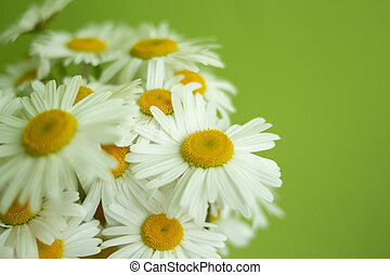 Yellow daisies on a background of green wall. place for text. selective focus.selective focus.