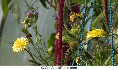 Yellow Daisies, Red Amaranth Tassels