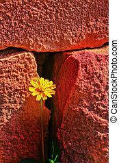 Yellow daisy and stone