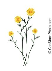Yellow Daisy Blossoms on A White Background