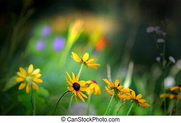 Yellow Daisy Flowers