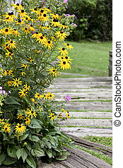 Yellow Daisys  - yellow daisys growing next to a walkway
