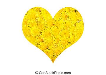 Yellow Dandelion Flower on White.