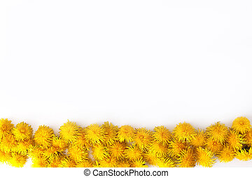 Yellow dandelions line in bottom on white background. Top view, realistic photo collage, rows of floral pattern. Border with copy space