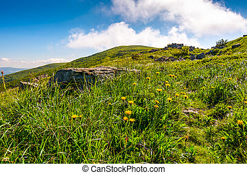 yellow dandelions on the grassy slope. lovely nature scenery...