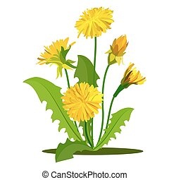Yellow dandelions set isolated on white. Vector