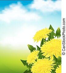 Yellow dandelions