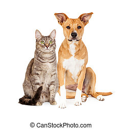 Yellow Dog and Tabby Cat - A cute yellow and white dog and a...