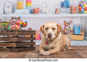 Yellow dog lays in front of a candy shop scene