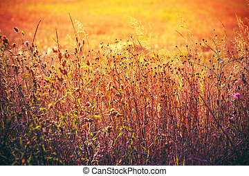 Yellow Dry Autumn Grass On Meadow