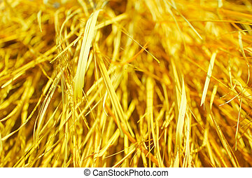 Yellow dry grass background. - Yellow dry grass texture. ...