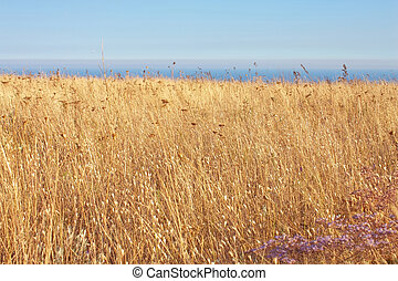 yellow dry grass field, blue sea and sky in National park Karadag mountains, Crimea, Ukraine