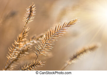 Yellow dry grass in the field in autumn