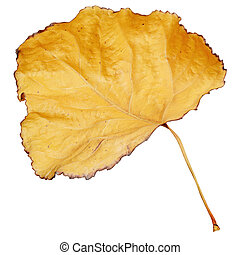 Yellow dry leaf isolated on white background.
