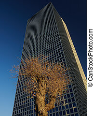 Yellow dry tree against a huge skyscraper with mirror windows and a blue sky, vertical frame.