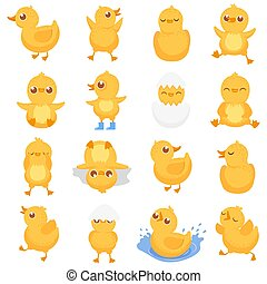 Yellow duckling. Cute duck chick, little ducks and ducky...