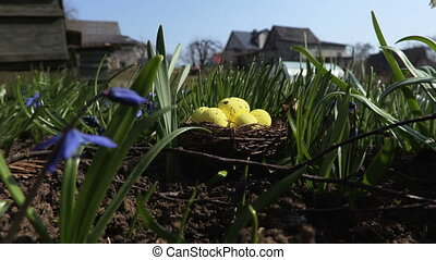 Yellow eggs in nest. Easter concept