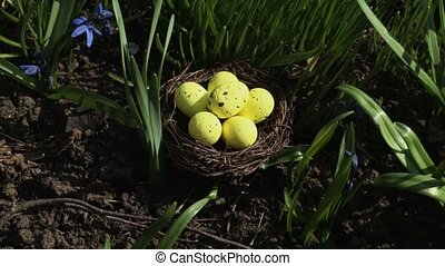 Yellow eggs in nest on green grass. Easter concept