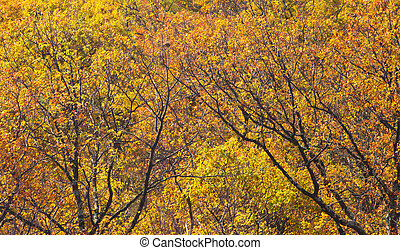 Yellow Fall Forest of Leaves