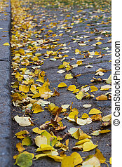 yellow fallen leaves on the sidewalk of paving stones