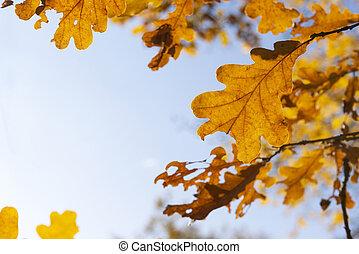fallen oak leaves against the blue sky in the sunlight