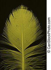 yellow feather on bl