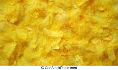 Yellow feathers background. Flat lay. - Yellow feathers...