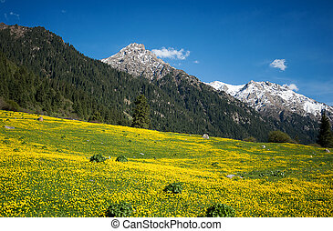 Yellow field of flowers in the mountains