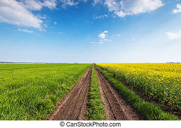 Yellow field rape, young green wheat and blue sky.