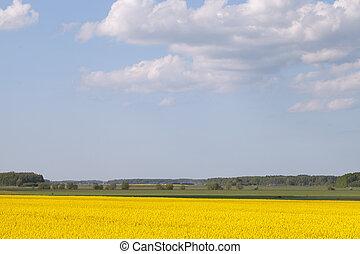 Yellow field.