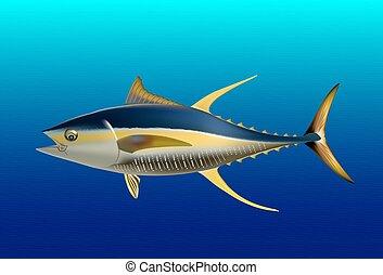 Yellow fin tuna, realistic sea fish illustration on blue...