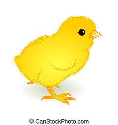yellow fledgling
