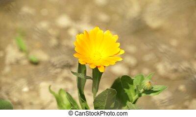 Yellow Flower 001