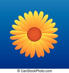 Yellow Flower Aster - Yellow aster on blue sky background. ...