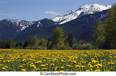 Yellow Flower Farm Snow Mountain Countryside Montana -...