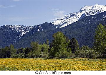 Yellow Flower Farm Snow Mountain Countryside Near Glacier National Park Montana