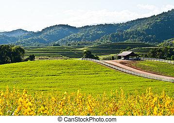 Yellow flower field view