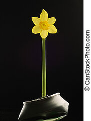 Yellow Flower Growing in Crushed Can