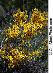 Yellow flower in a bush