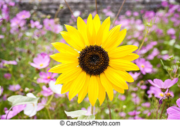 Yellow flower in a garden