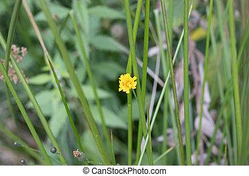 yellow flower in green autumn grass