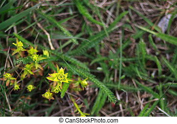 yellow flower in green grass