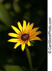 Yellow flower in the garden