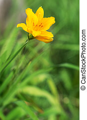 Yellow flower in the green grass.
